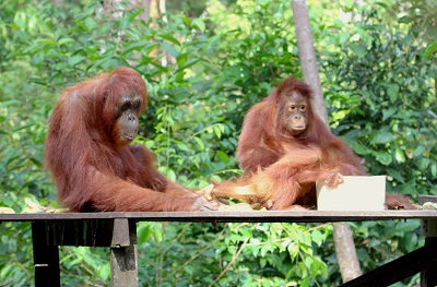 Orangutan Explores Standard House boating 3 days/2 nights